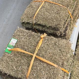 芝生 芝 TM9 1束(1平米)当たりの画像