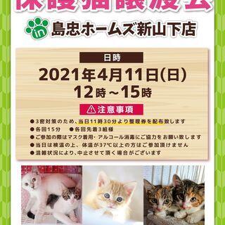 4月11日(日)おーあみ避難所譲渡会in新山下