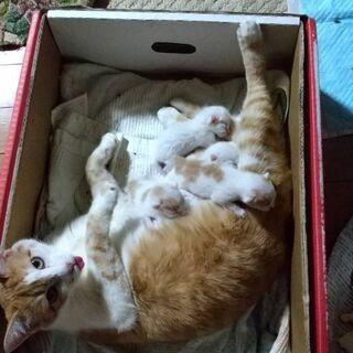 実家で茶トラの子猫が産まれました