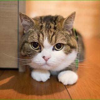 コロナの時こそ!ペット遠隔無料体験 受付中! ペットでお困…