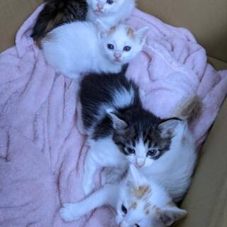 《 急募》生後1ヶ月子猫3匹