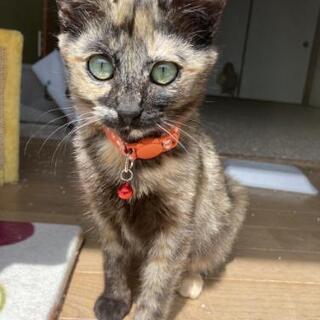 小柄なさび猫ちゃん