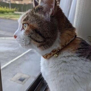 三毛猫の女の子