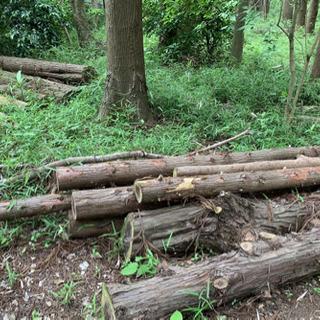 「薪」になる倒木や立木などお譲りください(伐採・倒木処理)