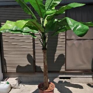 観葉植物 バナナツリー バナナの木 フェイク フェイクグリーン ...