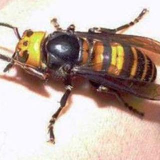【無料見積】スズメバチの駆除、害虫、害獣駆除