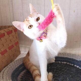 4月17日(土)三鷹で猫の譲渡会💓 少し大人の猫特集 白茶…