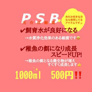 【ネット決済】【凪メダカ】自家培養光合成細菌(PSB)1リット