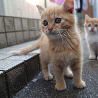 【北九州】子猫の預かりボランティア募集