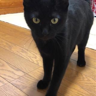 推定10ケ月黒猫メス 里親様決まりました