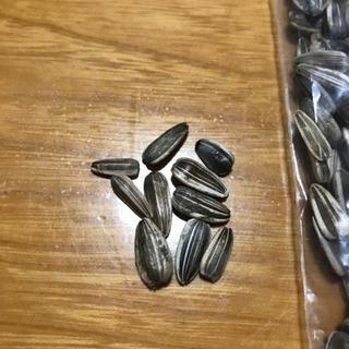 ひまわりの種 去年採取 約40g 250粒 - 花巻市