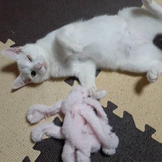 甘えっ子の女の子 - 猫