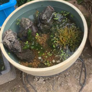 水槽鉢(プラ製)30cm台付