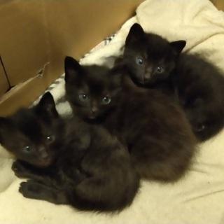 3匹とも里親さんが決まりそうなので、一旦中断します。募集 黒