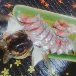 『釣ったアジのお刺身がこんなに美味しいなんて。。。』