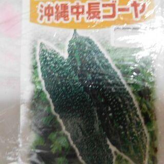 ゴーヤの苗 1株100円