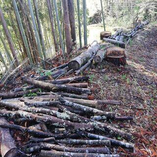 ケヤキ原木差し上げます