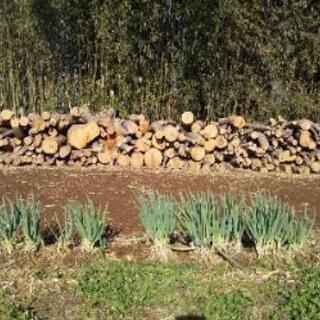 欅ケヤキの丸太積み放題 生木 キャンプ 薪ストーブ等に