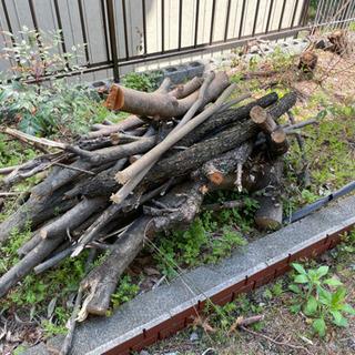 薪あげます 第二弾!松、樫の木