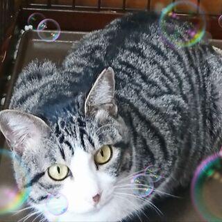 4月17日(土) 三鷹で猫の譲渡会💓 少し大人の猫特集  …