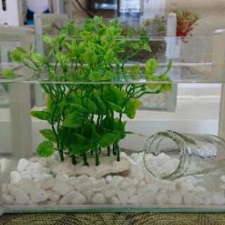 メダカの水族館
