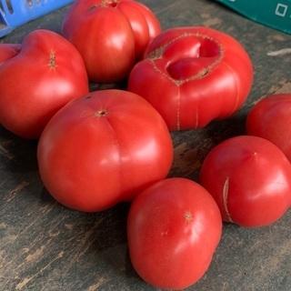 【5/13受付中】 B品トマトの画像