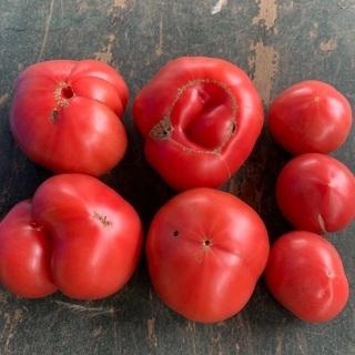 【5/13受付中】 B品トマト - 食品