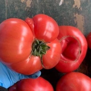 【5/13受付中】 B品トマト - 売ります・あげます