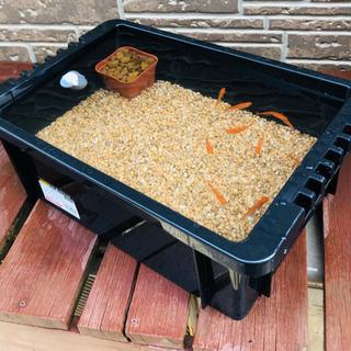 おまかせメダカ10匹、飼育ケース、麦飯石1キロ、赤玉土 す…