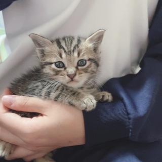 生後1ヶ月程度(里親さんの先住猫さんと合わず出戻り)の画像