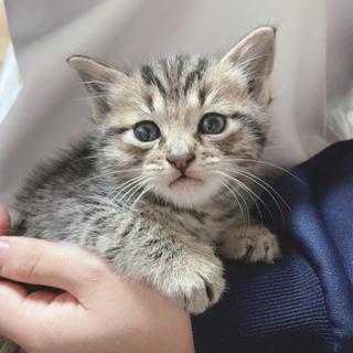 生後1ヶ月程度(里親さんの先住猫さんと合わず出戻り) - 名古屋市