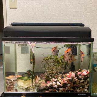 水槽・熱帯魚セット - その他