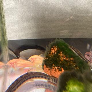 水槽・熱帯魚セット − 大阪府