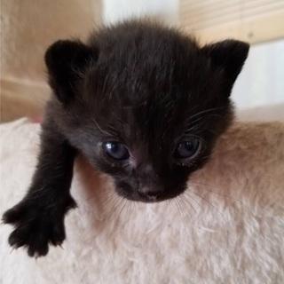 5兄弟すくすく育ち中♫ - 猫