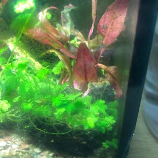 浮き草、水草セット