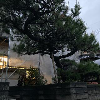 松の木の剪定をボランティアでお願いしたいです