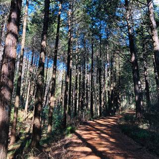 自伐林業家です。山林が欲しいです。