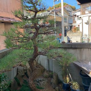 😊庭木剪定・草刈り・防草シート敷きなど気軽におまかせ下さい😊