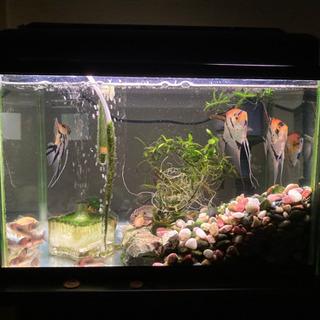 水槽・熱帯魚セットの画像