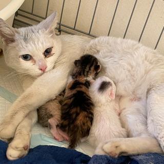 母子で2匹飼ってくださる方いませんか?猫ちゃん - 名古屋市