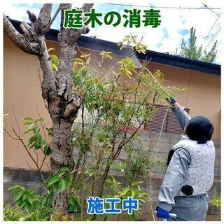 【石巻】お庭に毛虫など害虫発生する前に!5~6月庭木消毒承ります。