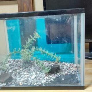 熱帯魚 水槽セット