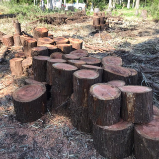 薪ストーブ用木材/杉/玉切り済/丸太