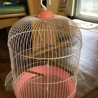 鳥かご ピンク