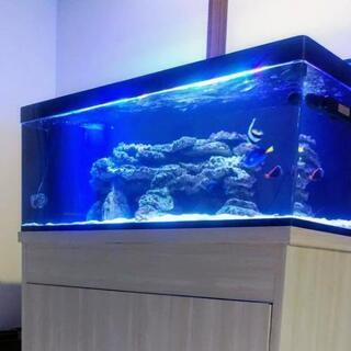 海水魚「イヌザメ40㎝~」1200㎝水槽。