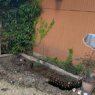 竹とか長い棒とか拾える所/山 - 名古屋市