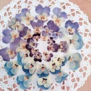 押し花ビオラハンドメイド素材セット