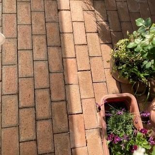 ガーデニング用レンガ200個以上、植木無料。