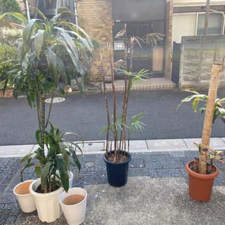 観葉植物 3つセット
