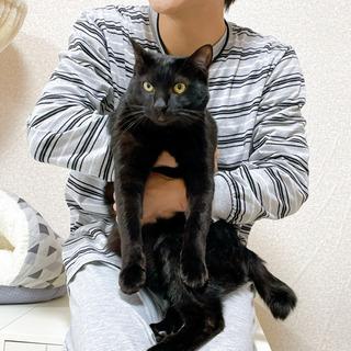 人間が大好きな仲良し猫です(2匹一緒に家族になってください) − 神奈川県
